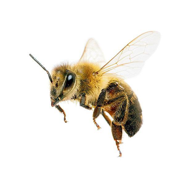 V I Wojewódzki Festiwal Konkursów O Pszczołach Chełmno